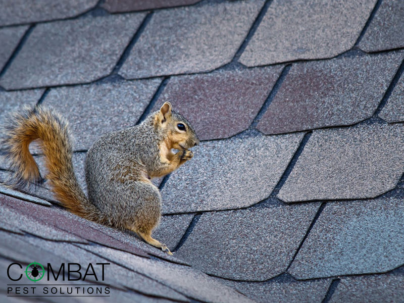 Do I Need To Call Squirrel Control 2