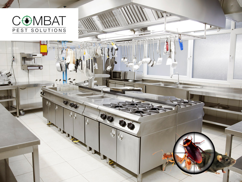 Commercial Pest Control Solutions to Prevent You Dishing The Dirt 2