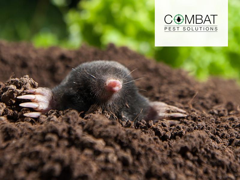 Moles, Mayhem & Pest Control Measures