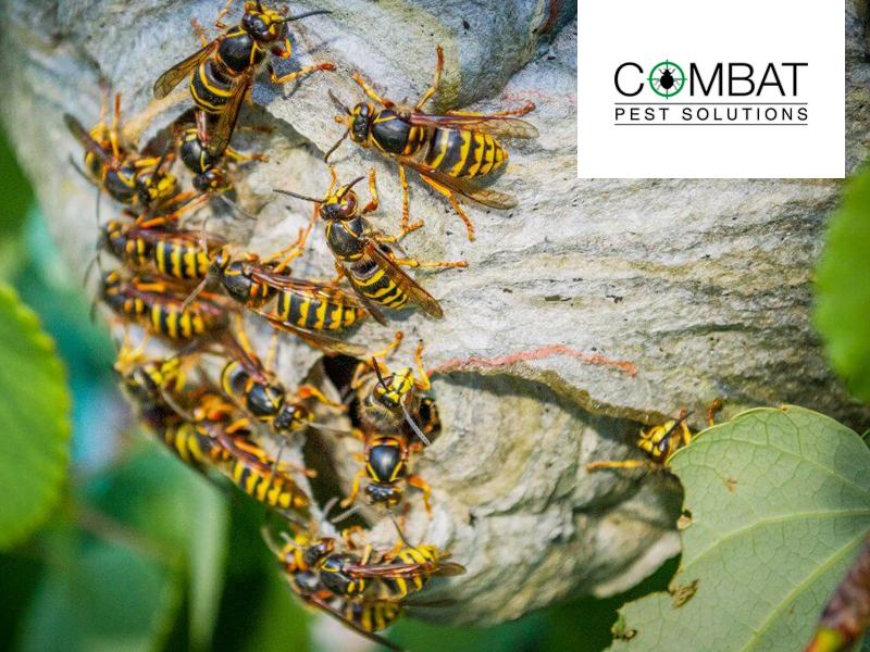 Wasps – Nature's Super Smart Apex Predators