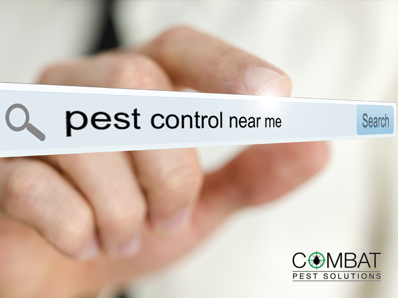 Pest Control Near Me: 5 Questions You Should be Asking